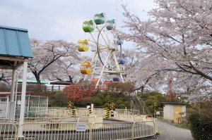 千手山公園観覧車と桜
